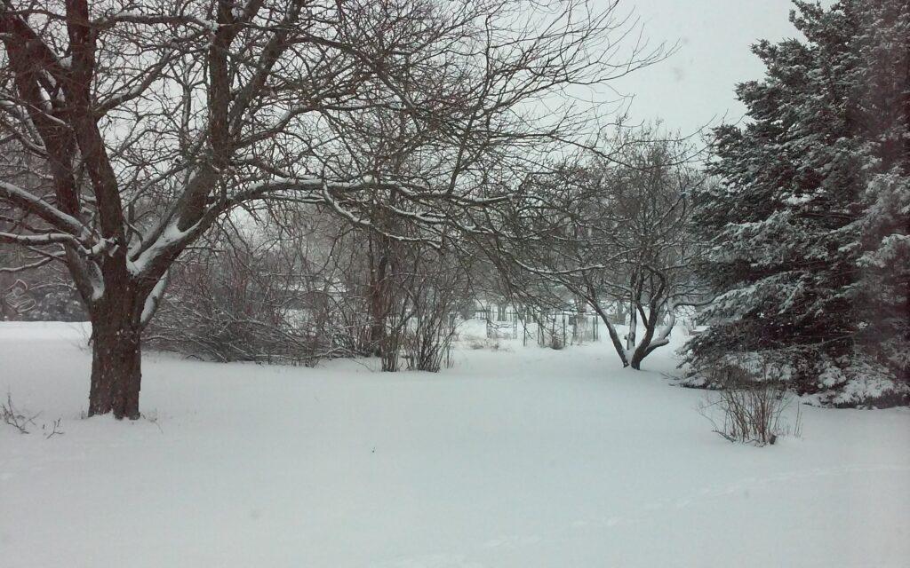 Snow Days at Hibbs Law